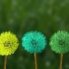 Fünf Pusteblumen in verschiedenen Farben eingefärbt.