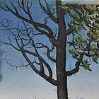 Ein Baum, dessen linke Hälfte verdorrt ist. Die rechte Hälfte trägt Blätter.