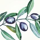 Olivenzweig, gezeichnet