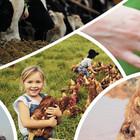 Collage Bildausschnitte: Kühe im Stall, Hand von Mensch und Affe, Kind trägt Huhn, Kamel
